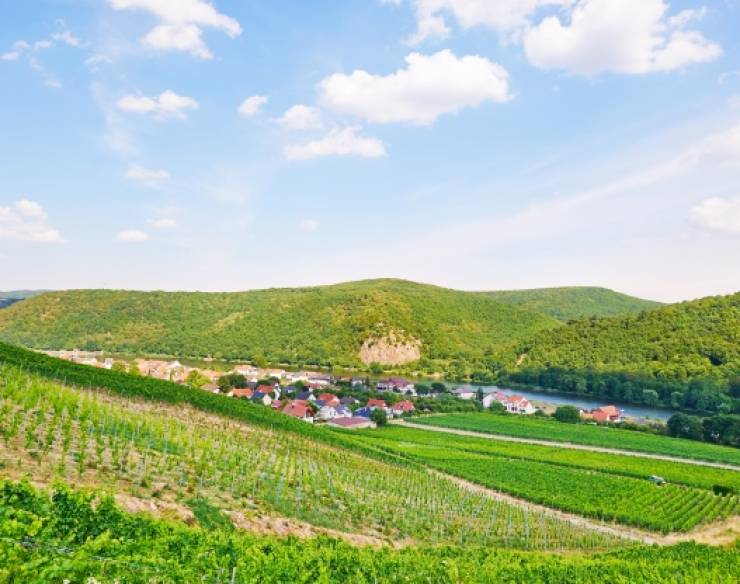 Weinanbau